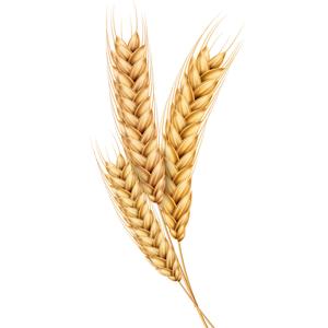 onion hair oil for reduces hair fall